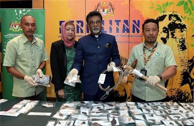 Malaysia bắt 2 người Việt Nam nghi săn trộm gấu, hổ quý hiếm - 1