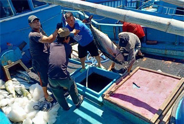 """Ngư dân """"méo mặt"""" vì mất mùa cá ngừ đại dương ở Trường Sa - 1"""