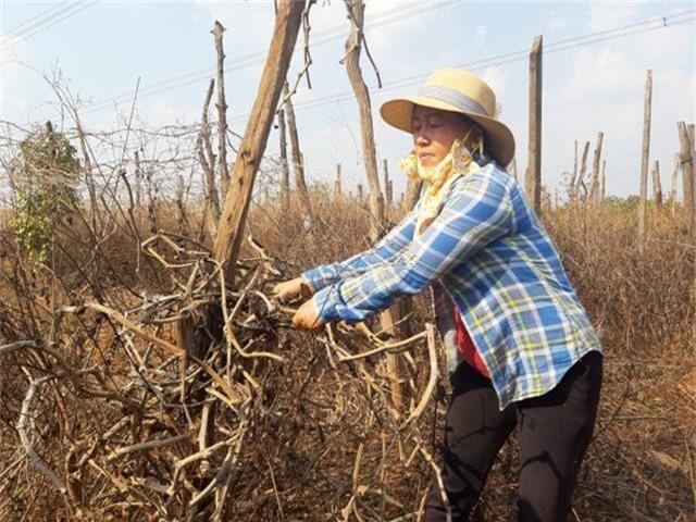 Đàn thiên nga được nuôi ở hồ Thiền Quang đã đẻ gần 20 quả trứng - 8