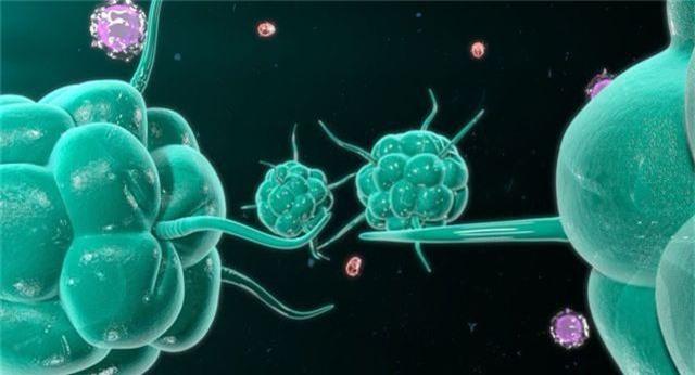 Thừa canxi trong cơ thể có thể dẫn đến ung thư - 1