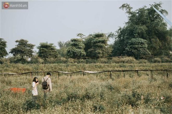 Chẳng cần lên tận Hà Giang vì Hà Nội cũng đang có cánh đồng tam giác mạch ngút ngàn, nhìn thôi cũng đủ mát cả lòng - Ảnh 2.