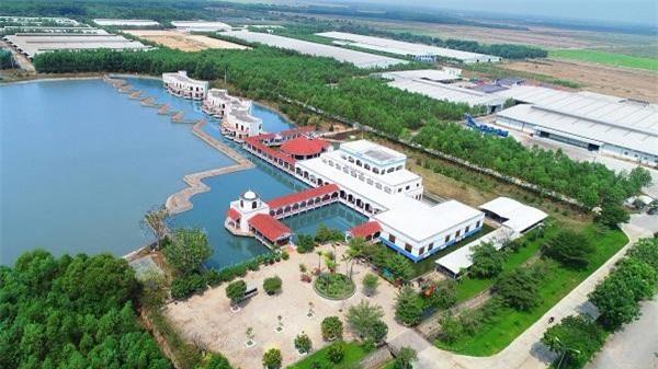 Trang trại bò sữa Tây Ninh có quy mô 8.000 bò bê với tổng vốn đầu tư ban đầu lên đến 1.200 tỷ đồng