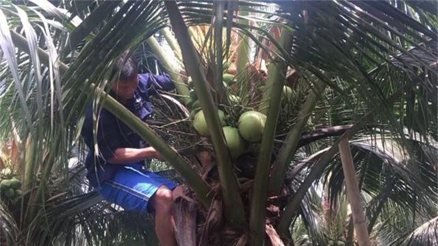 Nắng nóng kỷ lục, dừa xiêm xanh tăng giá - Ảnh 1.