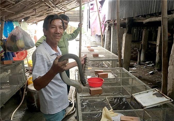 an giang: nuoi nhot bay ran ho heo, ban 300-400 ngan dong/ky hinh anh 1
