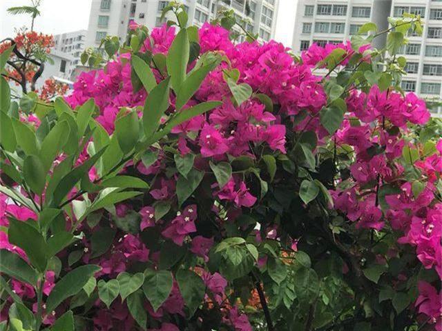 Ngắm căn biệt thự sang trọng ngập tràn hoa lá của Hồ Ngọc Hà - 12