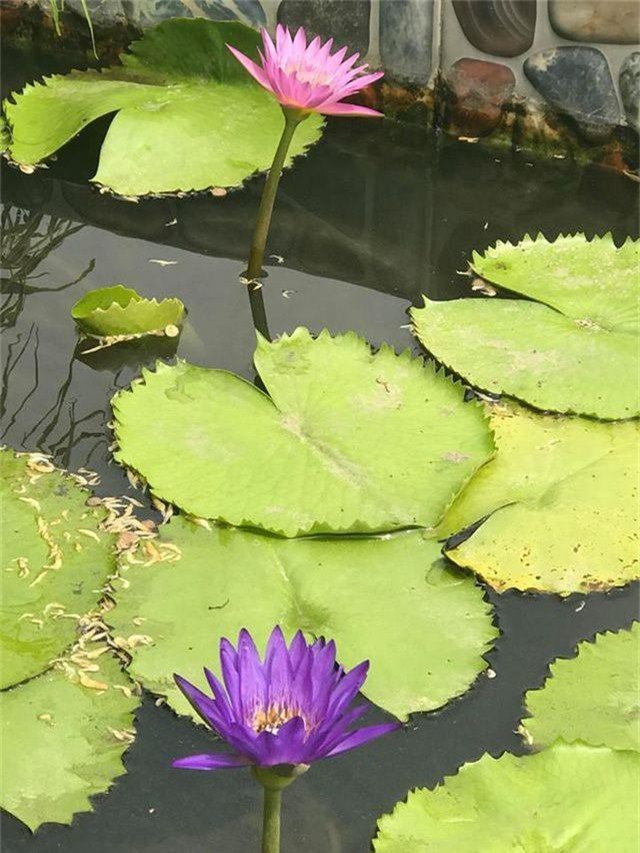 Ngắm căn biệt thự sang trọng ngập tràn hoa lá của Hồ Ngọc Hà - 13