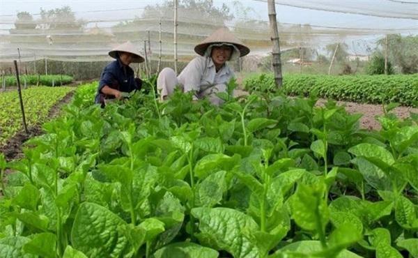 Nông sản trên địa bàn TP.HCM có tiềm lực phát triển mạnh mẽ (Ảnh: TL)