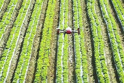 Máy bay không người lái được ứng dụng ngày càng rộng rãi trong nông nghiệp.