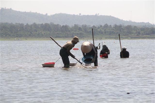 Đổ xô đi đãi hến mùa nước cạn ở hồ Ea Kao - 1