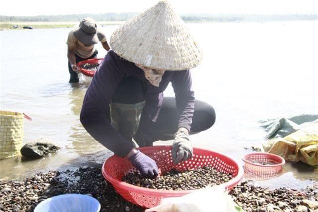 Đổ xô đi đãi hến mùa nước cạn ở hồ Ea Kao - 5