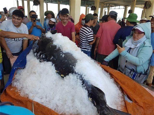 """Ngư dân Phú Yên câu được 2 con cá ngừ vây xanh """"siêu khủng"""" tổng trọng lượng gần 600kg - 5"""