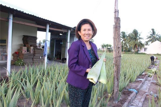 Nha đam được mùa lại được giá, nông dân Ninh Thuận phấn khởi - 2