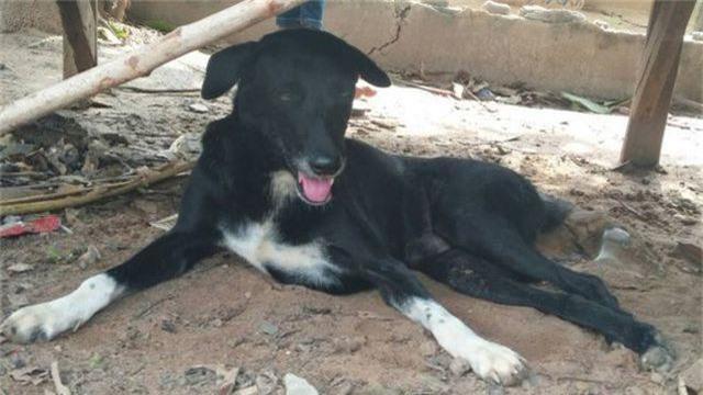 Thái Lan: Chú chó què gây bão vì cứu bé sơ sinh bị mẹ chôn sống - 1