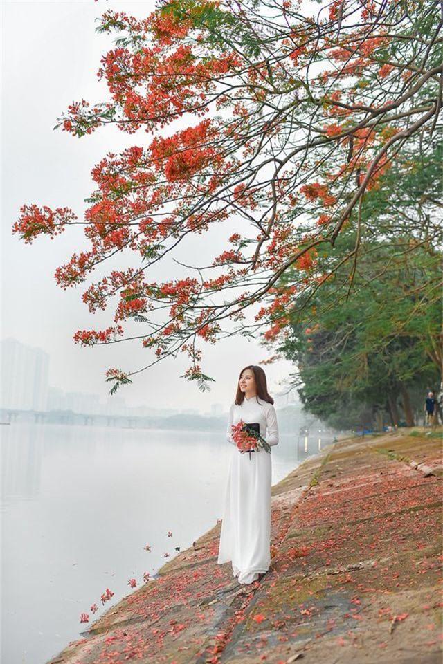 Thiếu nữ bâng khuâng kỷ niệm dưới tán phượng đỏ rực ven hồ - 1