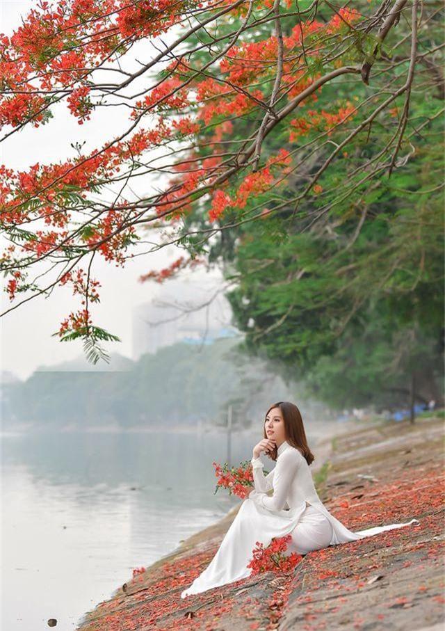 Thiếu nữ bâng khuâng kỷ niệm dưới tán phượng đỏ rực ven hồ - 5