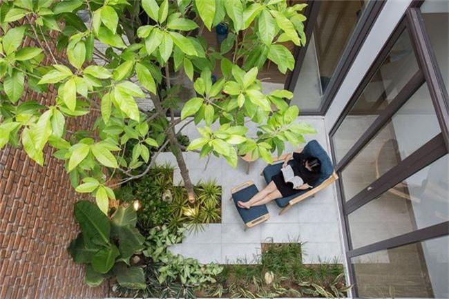 Những loại cây nên trồng ở giếng trời giúp không khí trong lành và tốn ít công chăm sóc - Ảnh 1.
