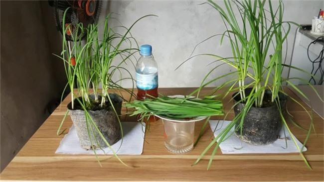 Nhà nào cũng nên trồng sẵn một chậu cây hẹ vì những lợi ích cho sức khỏe trẻ nhỏ và trẻ sơ sinh quá tốt thế này - Ảnh 1.