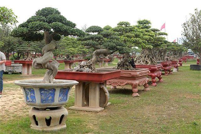 Vườn cây nghệ thuật di sản 300 tỷ đồng độc nhất vô nhị tại Việt Nam - 10