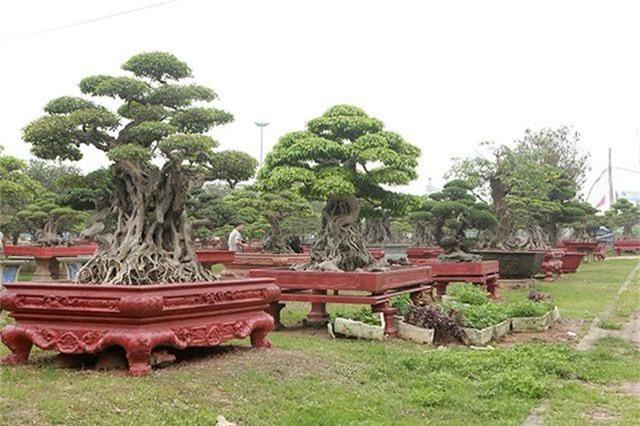 Vườn cây nghệ thuật di sản 300 tỷ đồng độc nhất vô nhị tại Việt Nam - 13