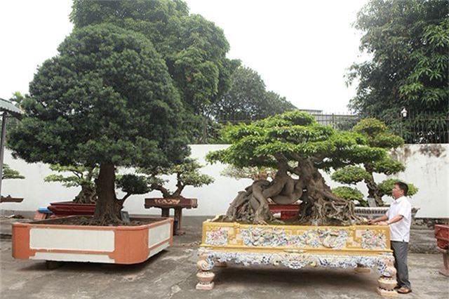 Vườn cây nghệ thuật di sản 300 tỷ đồng độc nhất vô nhị tại Việt Nam - 2