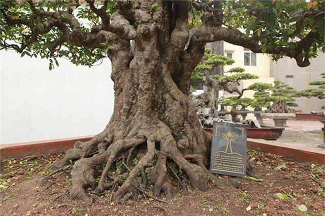 Vườn cây nghệ thuật di sản 300 tỷ đồng độc nhất vô nhị tại Việt Nam - 4