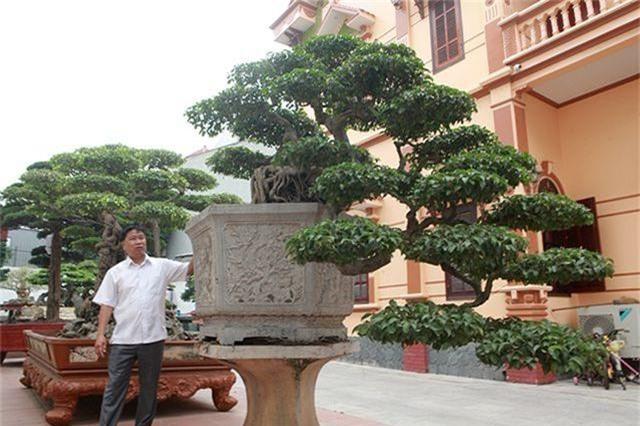 Vườn cây nghệ thuật di sản 300 tỷ đồng độc nhất vô nhị tại Việt Nam - 7
