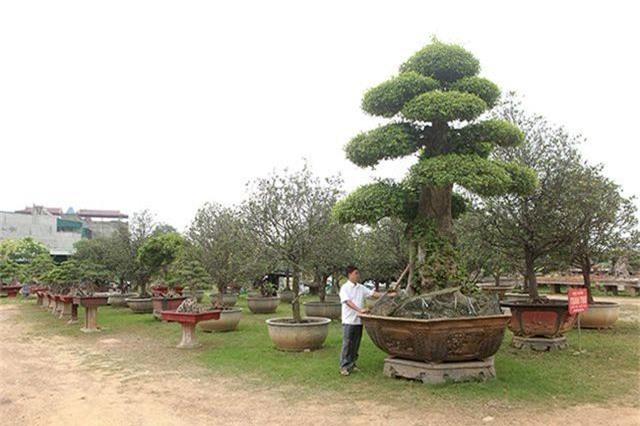 Vườn cây nghệ thuật di sản 300 tỷ đồng độc nhất vô nhị tại Việt Nam - 8