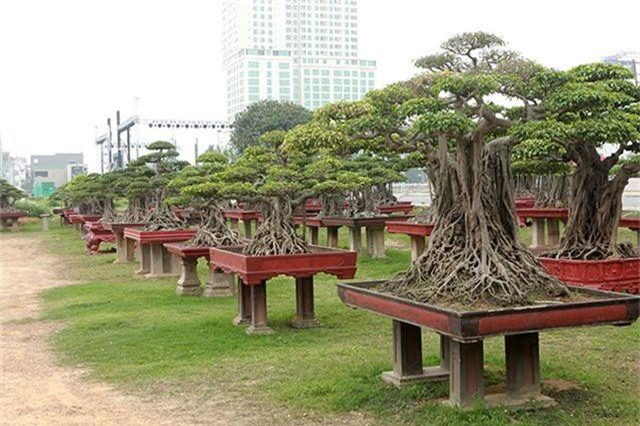 Vườn cây nghệ thuật di sản 300 tỷ đồng độc nhất vô nhị tại Việt Nam - 9
