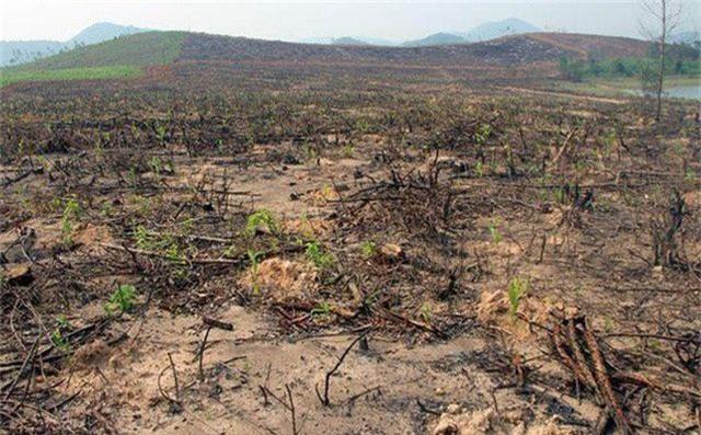 Gây thất thoát hơn 700 triệu đồng, 4 cán bộ Ban quản lý rừng phòng hộ bị khởi tố - 1