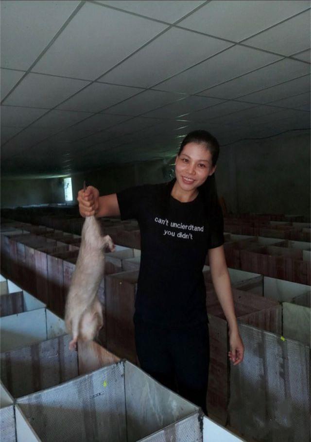 Trang trại nuôi dúi của cử nhân 8X ở Quảng Nam