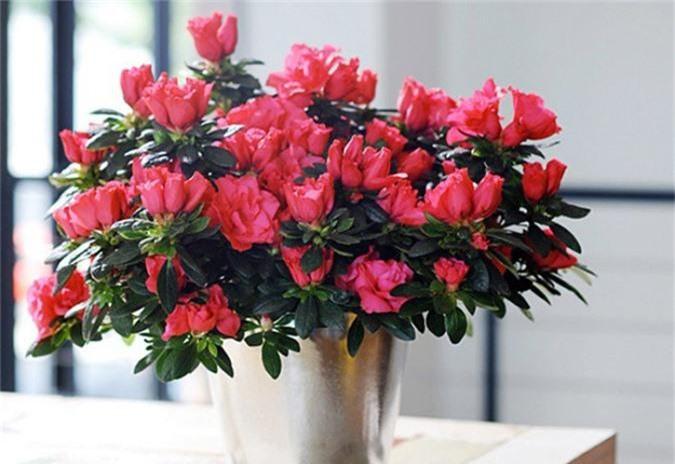 Cẩn trọng khi trồng những cây cảnh ưa chuộng trưng trong nhà nhưng cực độc nếu ăn phải - Ảnh 5.