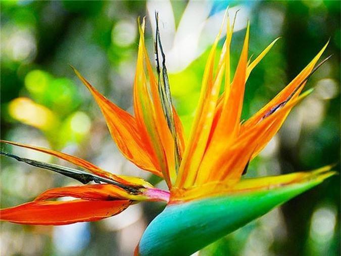 Cẩn trọng khi trồng những cây cảnh ưa chuộng trưng trong nhà nhưng cực độc nếu ăn phải - Ảnh 6.