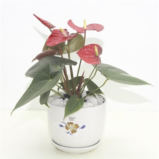 Cẩn trọng khi trồng những cây cảnh ưa chuộng trưng trong nhà nhưng cực độc nếu ăn phải - Ảnh 9.