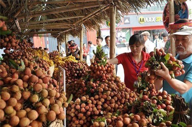 Trung Quốc thu hoạch 500.000 ha vải thiều, Việt Nam có lo? - 1