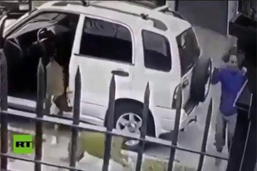 Hai chú chó rượt tên cướp chạy trối chết, cứu chủ thoát khỏi nguy hiểm.