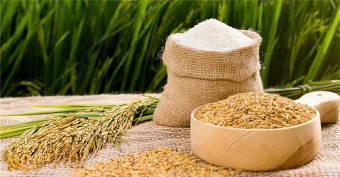 Dự báo giá lúa gạo trong nước có thể giảm trong tháng tới do thu hoạch vụ Hè Thu khiến nguồn cung gia tăng. (Ảnh minh họa)