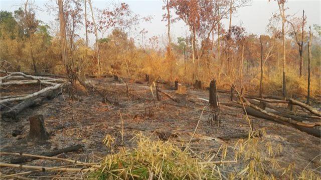 Ban quản lý rừng Đức Cơ để mất hơn 9.000ha rừng  - 1