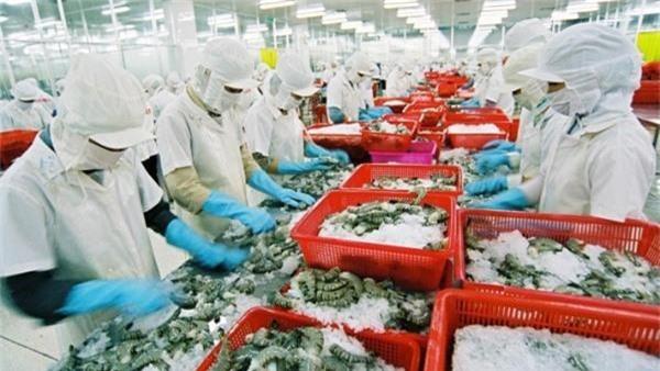 CPTPP có hiệu lực, xuất khẩu tôm Việt Nam gặp khó