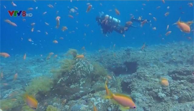 Cảnh báo số lượng sinh vật biển giảm mạnh - Ảnh 1.