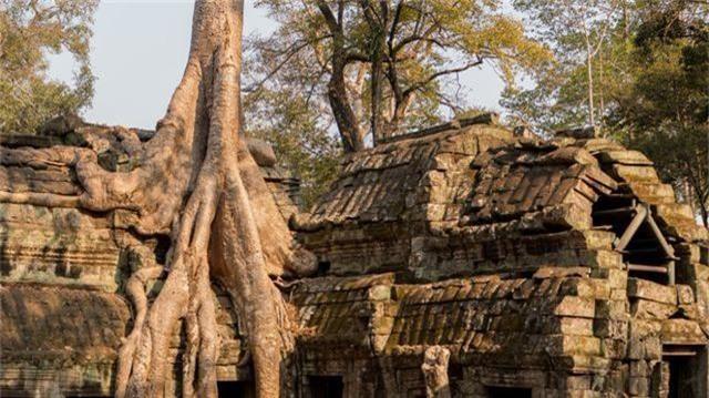 """Rễ cây cổ thụ vặn xoắn như trăn khổng lồ muốn """"nuốt chửng"""" ngôi đền - 3"""