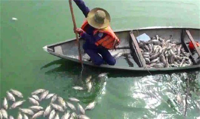 Tình trạng cá chết ở hồ trung tâm Đà Nẵng ngày càng nhiều - 1