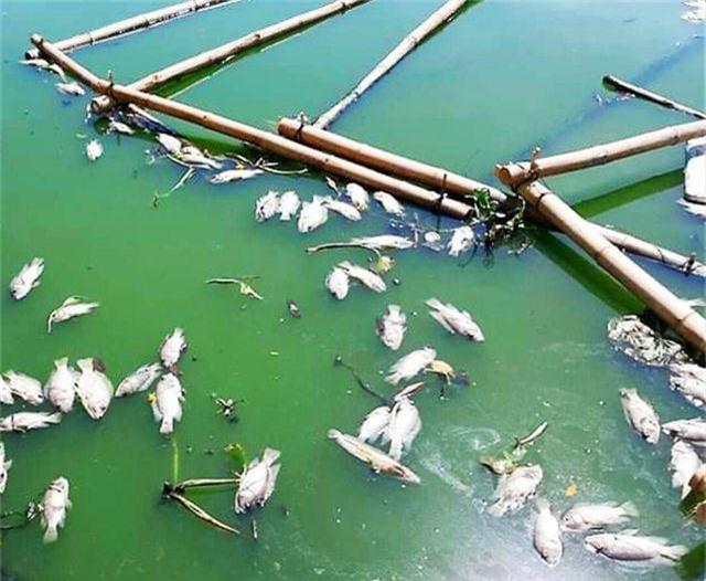 Tình trạng cá chết ở hồ trung tâm Đà Nẵng ngày càng nhiều - 2