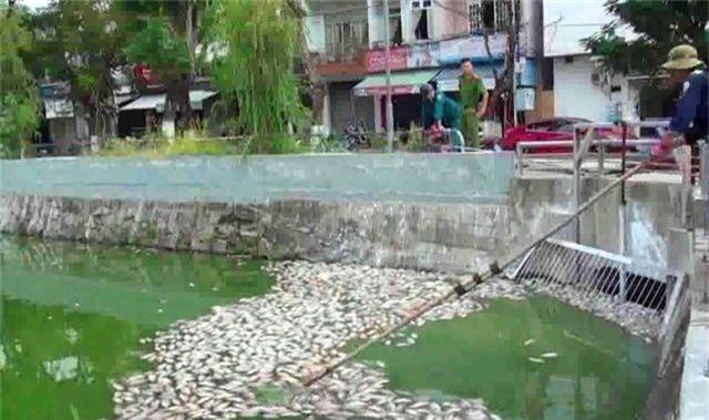 Tình trạng cá chết ở hồ trung tâm Đà Nẵng ngày càng nhiều - 4