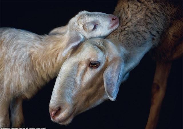Những bức ảnh động vật hoang dã tạo dáng cực duyên - Ảnh 10.