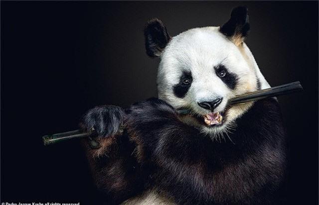 Những bức ảnh động vật hoang dã tạo dáng cực duyên - Ảnh 2.
