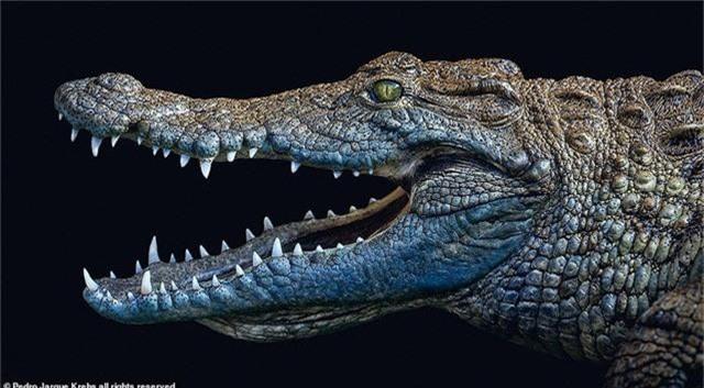 Những bức ảnh động vật hoang dã tạo dáng cực duyên - Ảnh 3.
