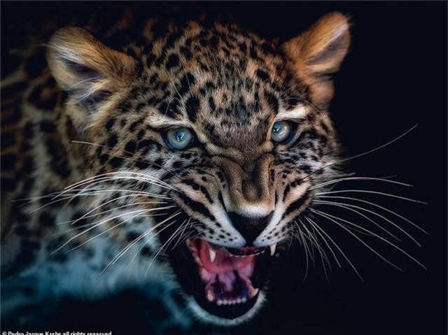 Những bức ảnh động vật hoang dã tạo dáng cực duyên - Ảnh 4.