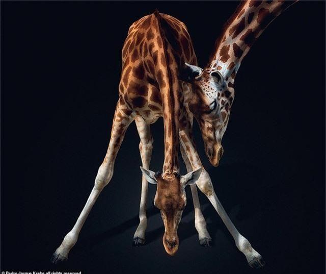 Những bức ảnh động vật hoang dã tạo dáng cực duyên - Ảnh 7.