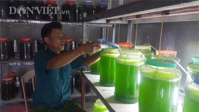 "chuyen la thai binh: nuoi thu nuoc xanh le ma ""rot"" ra tram trieu hinh anh 3"