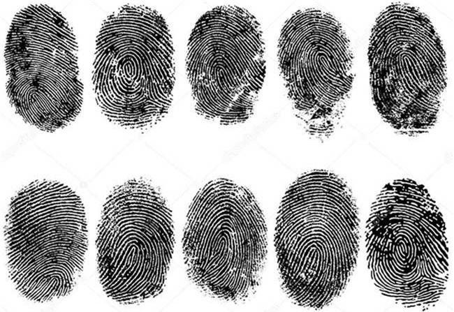 Trung bình một người có khoảng 50 điểm giao nhau giữa các đường vân trên mỗi ngón tay.